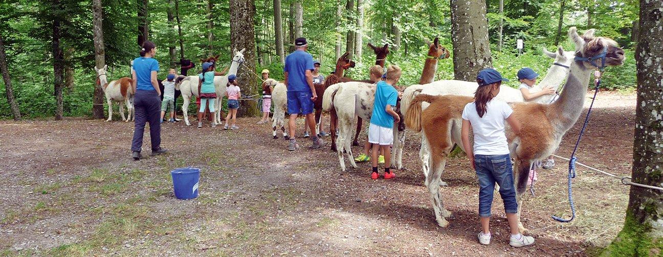 Ferien Event Lamas